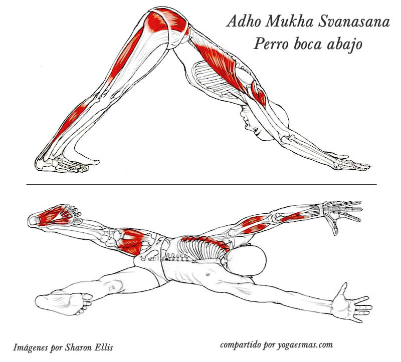 How to avoid injuries in yoga practice 5